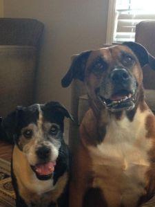 Bosco & Sadie Original